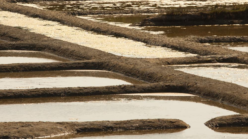 reflets d'or dans les marais salants