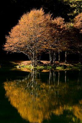 Reflets d'un arbre aux feuilles d'Or
