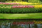 Reflets - Parc floral de KEUKENHOF -