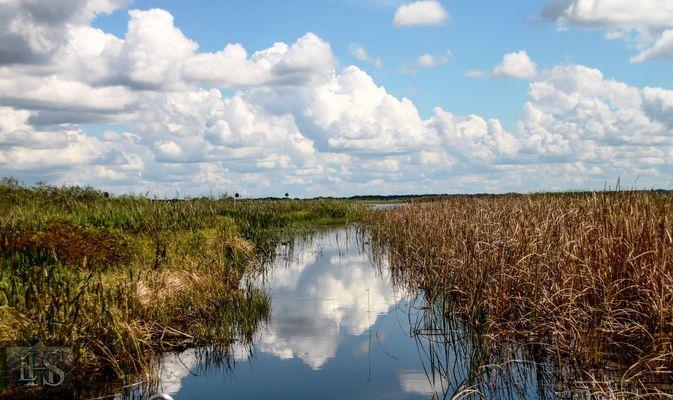 Reflets sur les Everglades