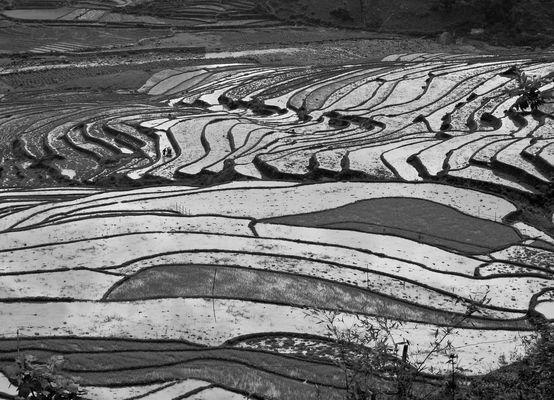 Reflets sur rizières