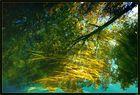 réflexions dans l'eau