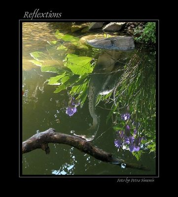 Reflextions