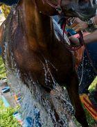 Refrescando al caballo. Raid del Cabrerès 2012