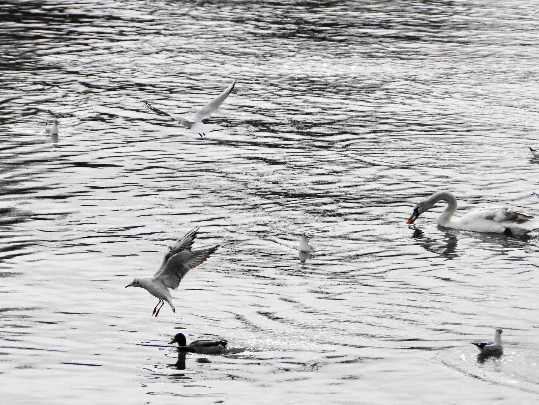refuge de canards sur les bords de seine