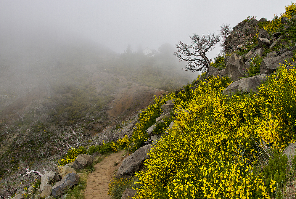 Refugio Pico Ruivo kommt in Sicht