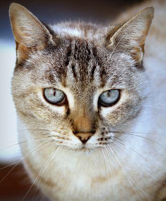 regard bleu éléctrique