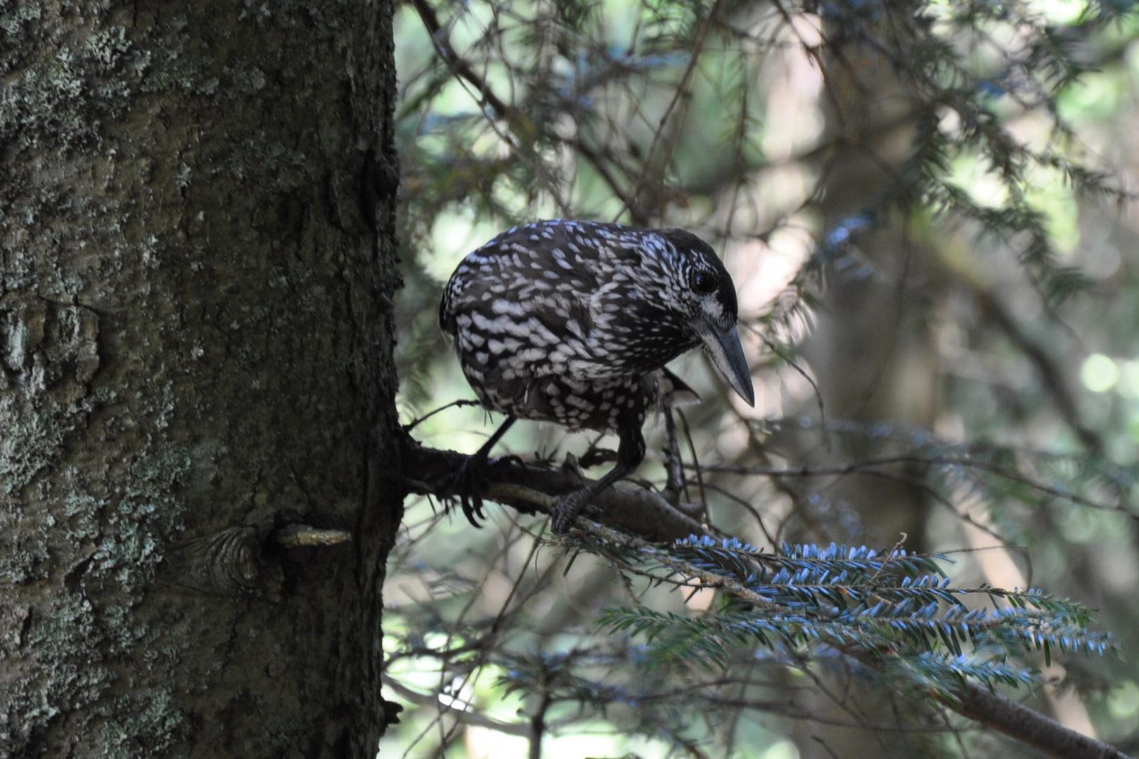 Regard d'un oiseau sur un photographe...