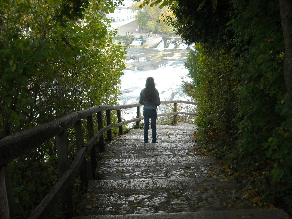 - Regardant les chutes du Rhin -