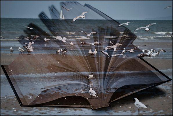 Regarde la mer.... le coeur est un oiseau..... LIBERTE !!!!!