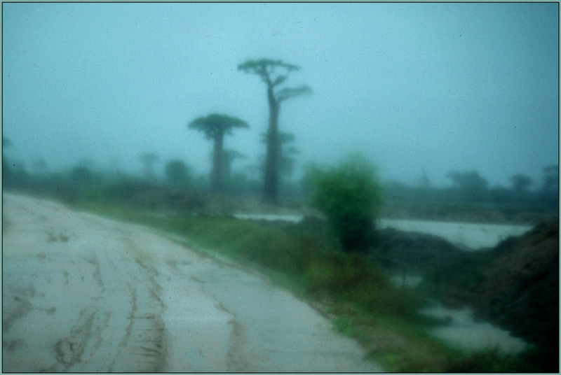 Regen bei der Baobab-Allee