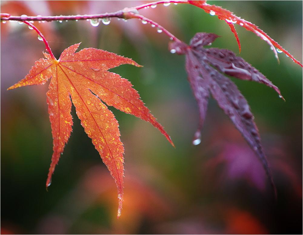 Regen-Blätter