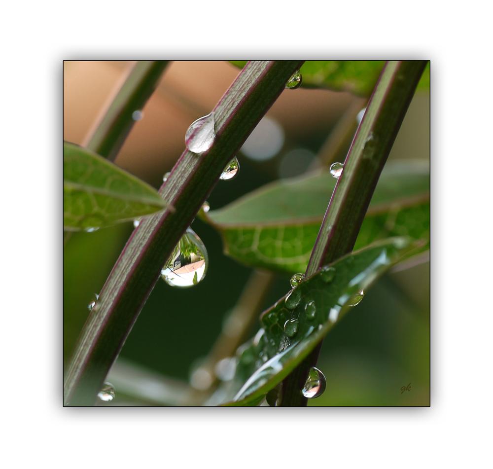* regen *