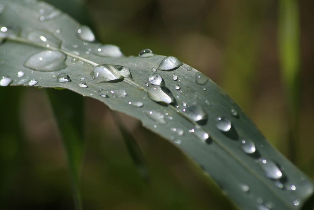 Regen für die Landwirtschaft...