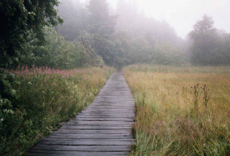 Regen im Moor