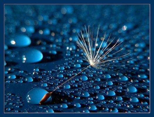Regen ..-..schirm(chen)