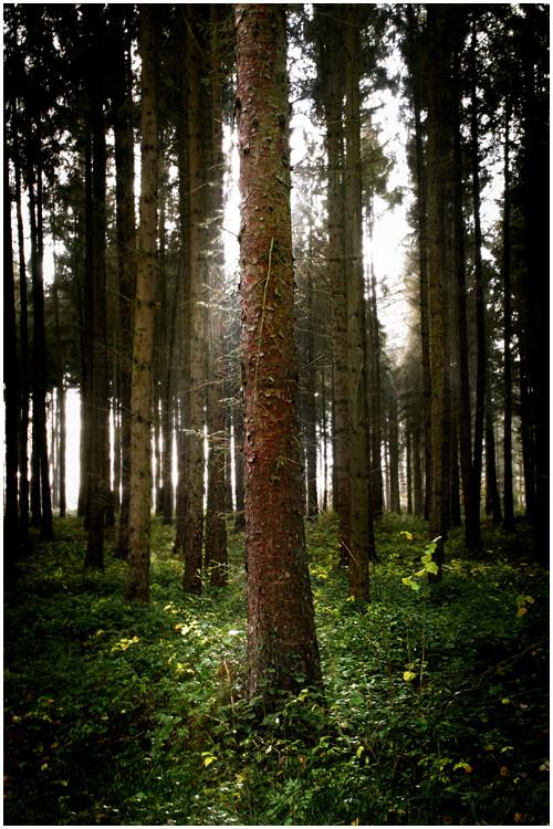 Regen || Wald