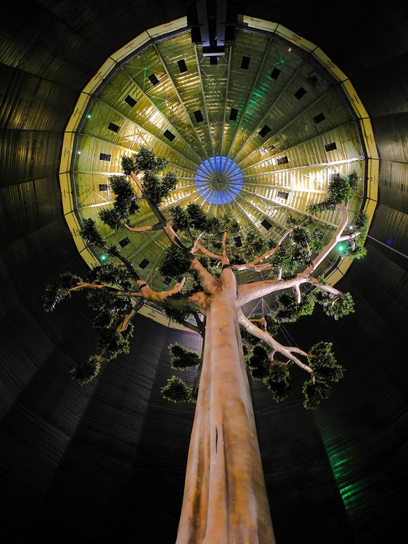 Regenbaum: Magische Orte