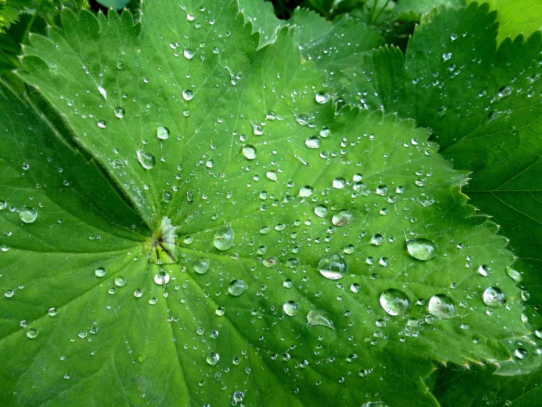 RegenBlatt