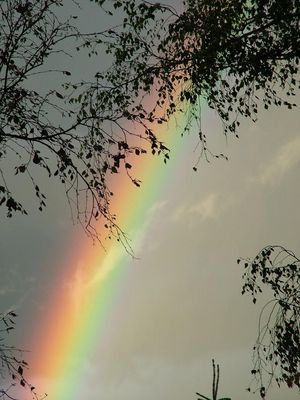 Regenbogen am Morgen #2
