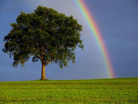 Regenbogen an einem Sommerabend