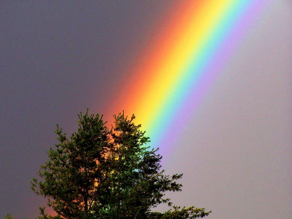 Regenbogen aus dem Baum Foto & Bild | regenbögen, wetter ...