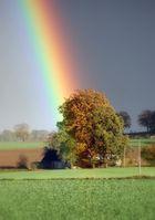 Regenbogen-baum