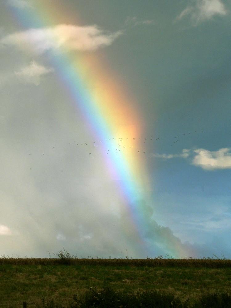 Regenbogen bei Findhorn
