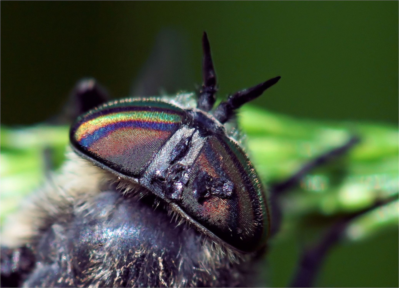 Regenbogen - Farben