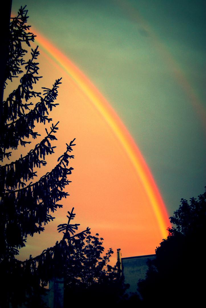 Regenbogen hinter Tannenwogen