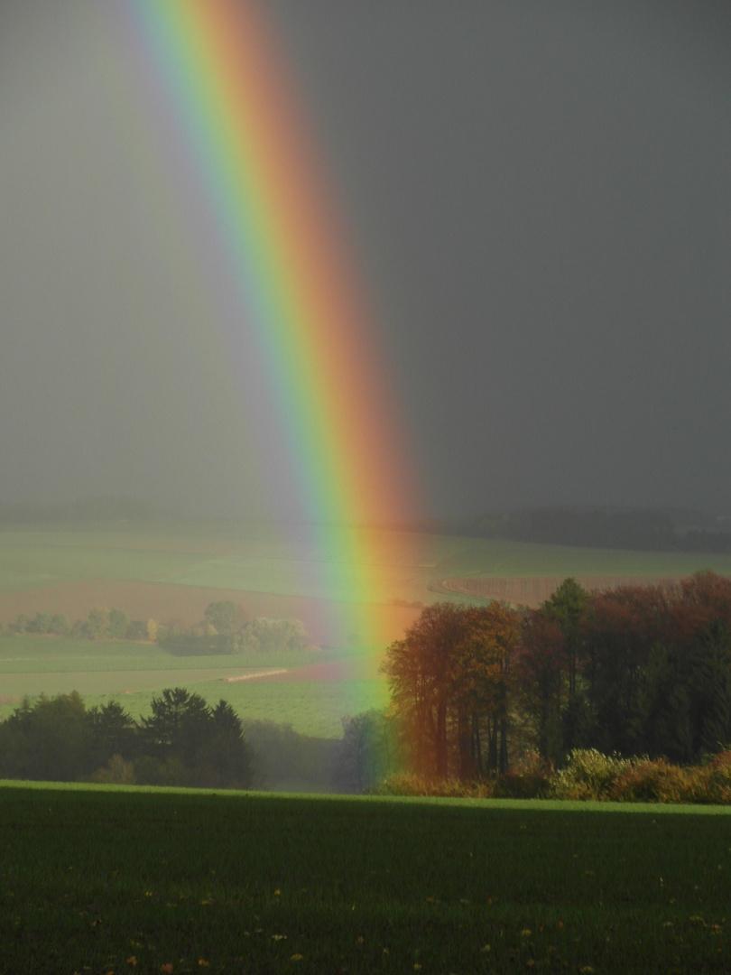 Regenbogen im Wald