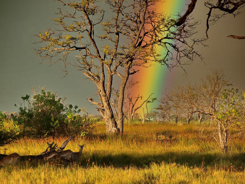 Regenbogen in der Wildnis