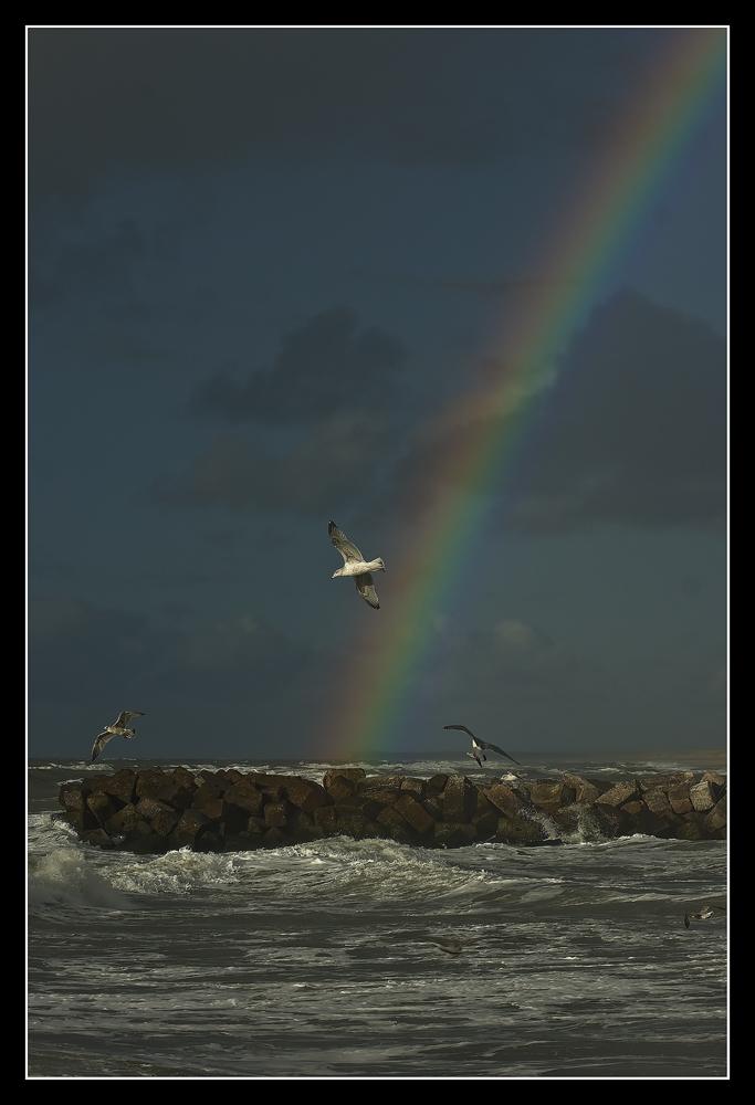 Regenbogen Möwe