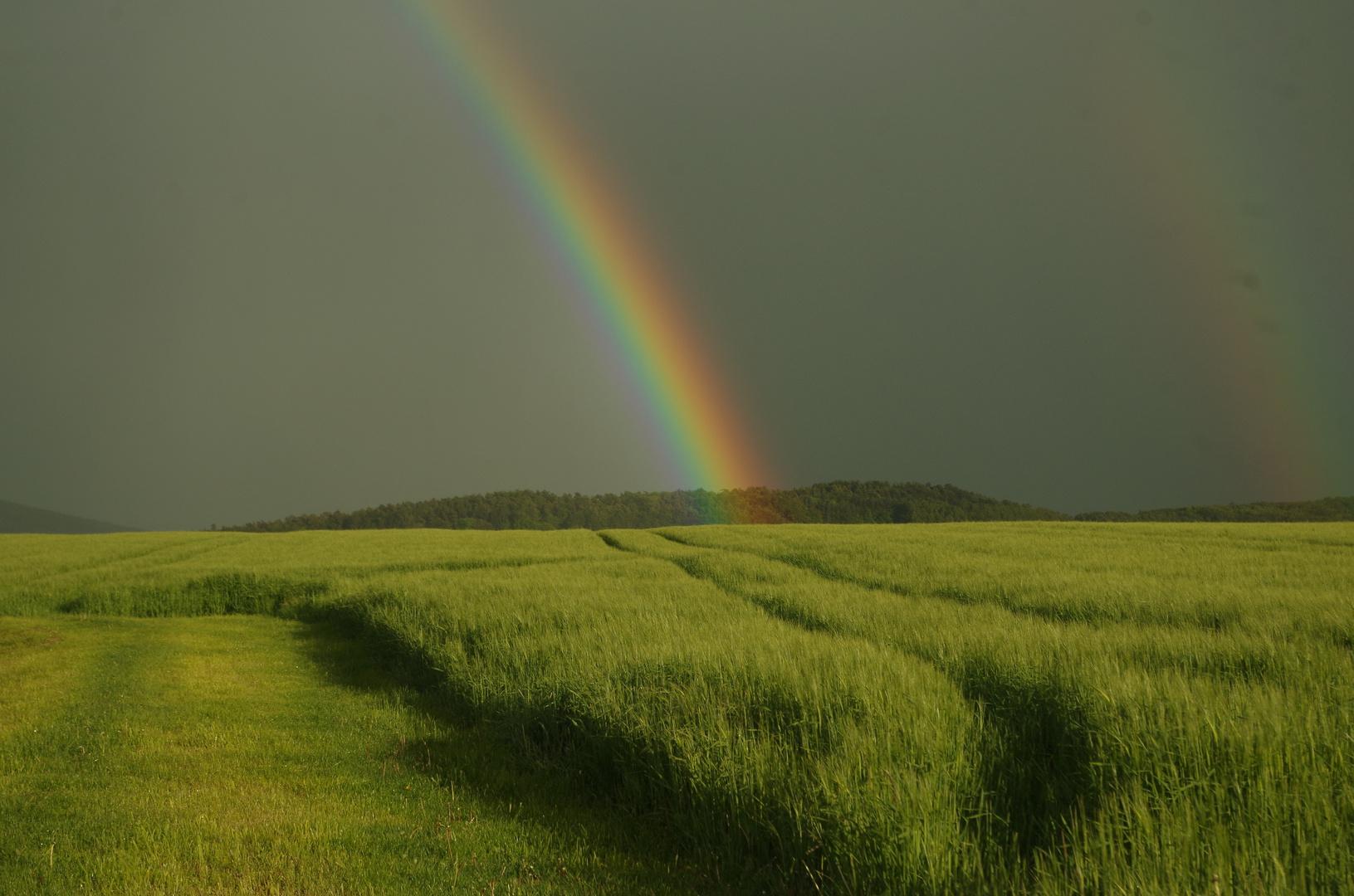 Regenbogen trifft Feld