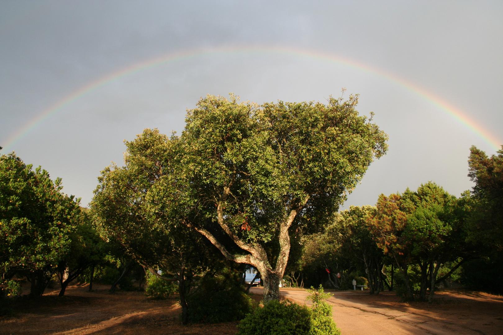 Regenbogen über Campingplatz bei Pianotolli (2006-06-02)