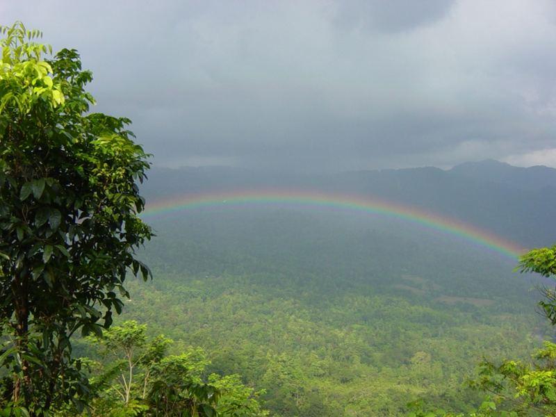 Regenbogen überm Regenwald