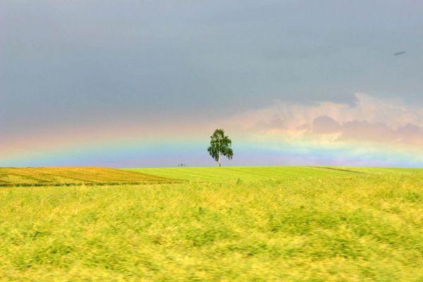 Regenbogenbaum