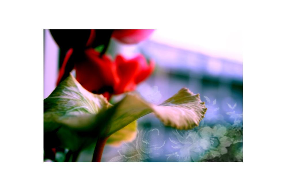 regennasses blumenfenster (II) (26.07.06)