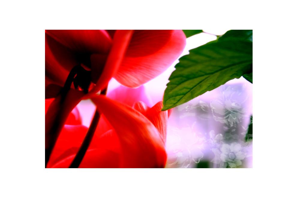 regennasses blumenfenster (III) (26.07.06)