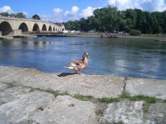 Regensburger Ente