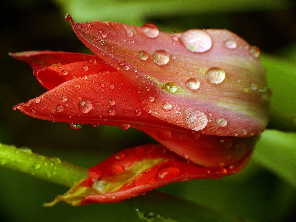 Regenschwer