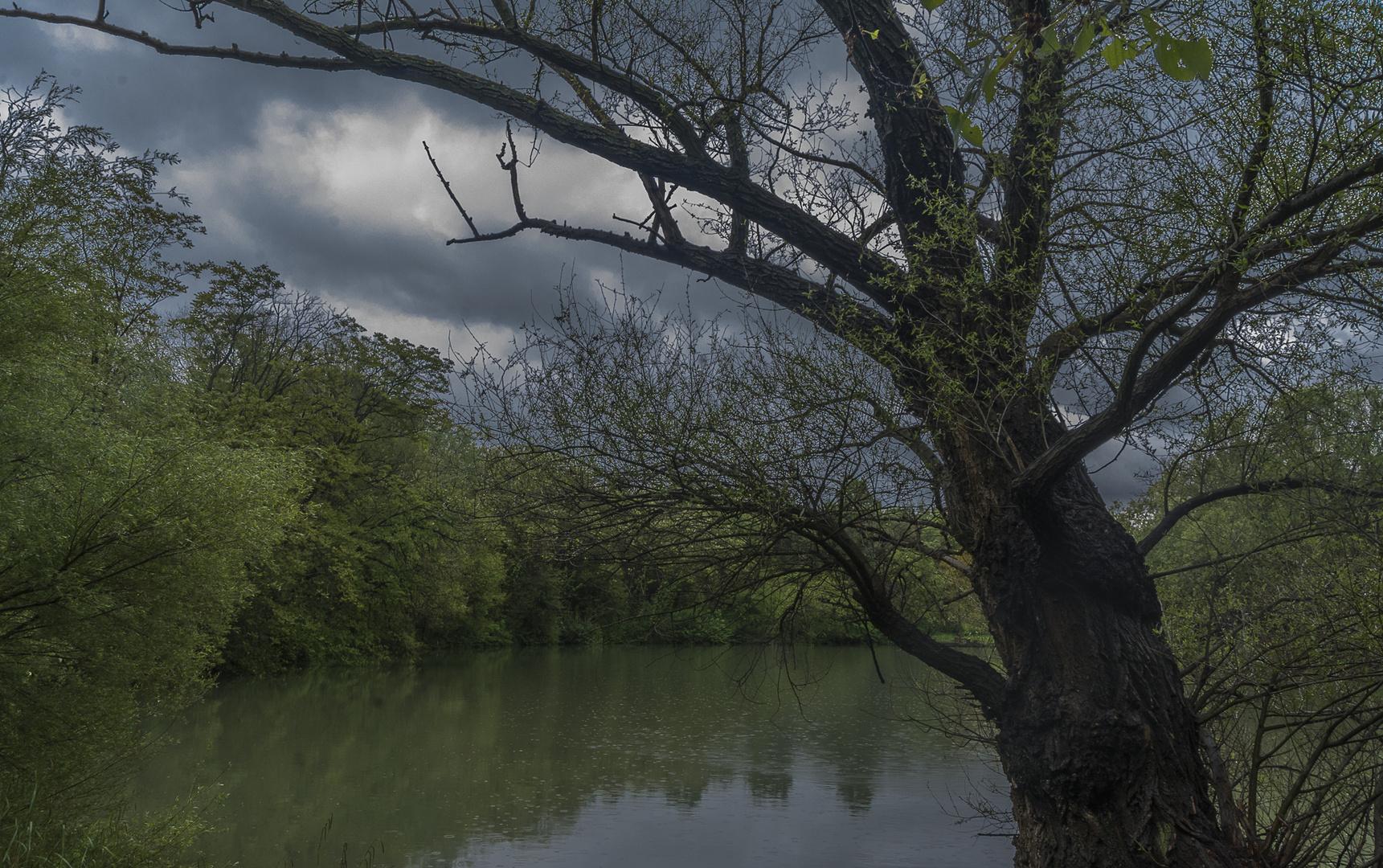 Regenstimmung am Teich