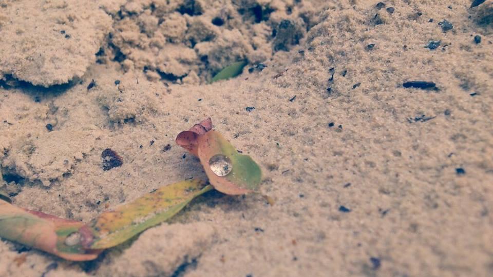 Regentropfen auf einem kleinen Blatt und Sand.