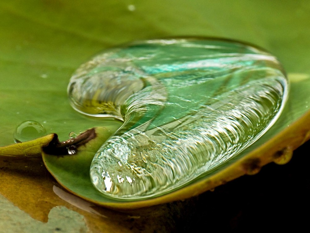Regentropfen auf Lotosblatt