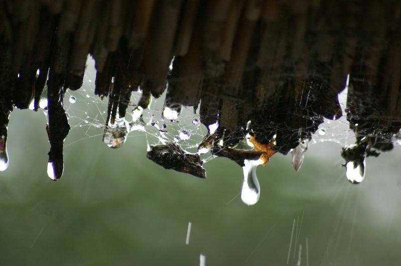 Regentropfen, die an .....