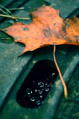 Regentropfen im Netz