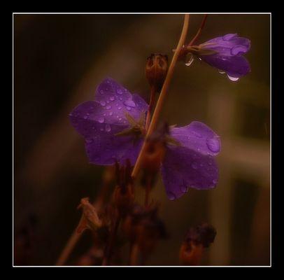 Regentropfen in Farbe