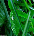 Regentropfen mal anders