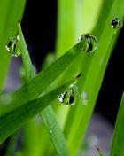 Regentropfenperlen
