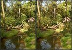 Regenwald 3D